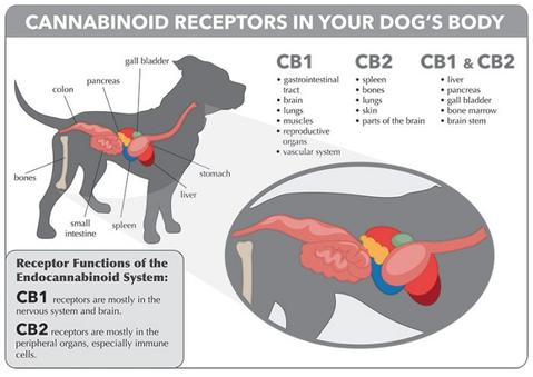 CBD animals benifits UK