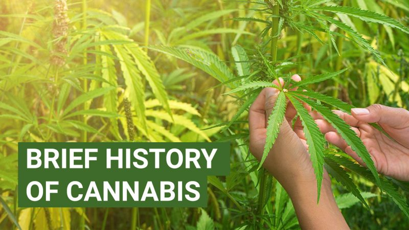 Brief history of cannabis