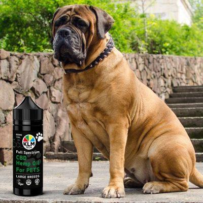 LARGE PET BREEDS cbd hemp oil for dogs 600mg