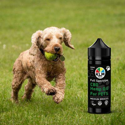 Medium PET BREEDS cbd hemp oil for dogs 300mg